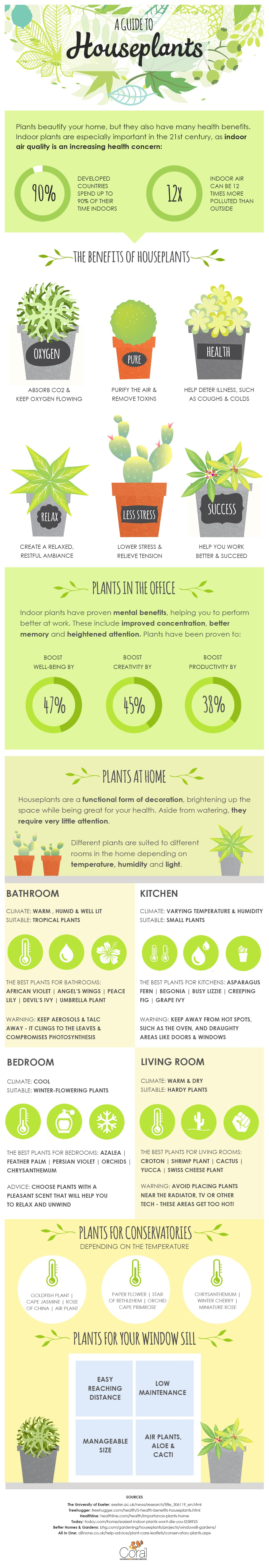 A guide to house plants infographic