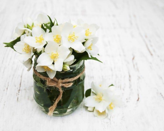 vase with jasmine flowers